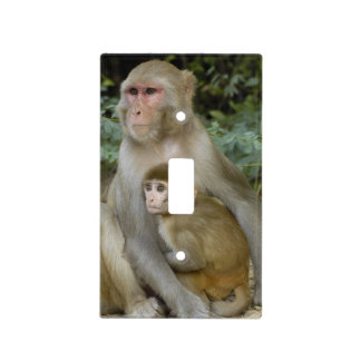 Rhesus Macaques Macaca mulatta) mother & baby Switch Plate Covers