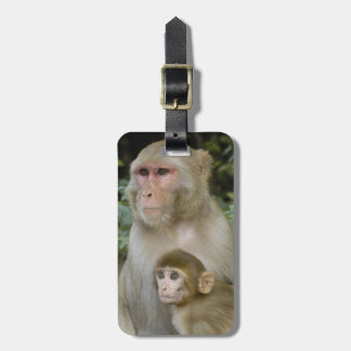 Rhesus Macaques Macaca mulatta) mother & baby Tags For Bags