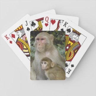 Rhesus Macaques Macaca mulatta) mother & baby Playing Cards