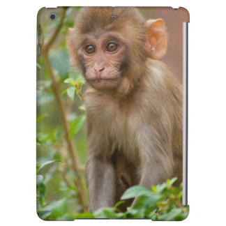 Rhesus Monkey Baby, Monkey Temple, Jaipur iPad Air Cover