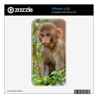 Rhesus Monkey Baby, Monkey Temple, Jaipur iPhone 4S Skin
