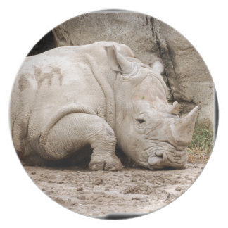 rhino11_10x10 plate