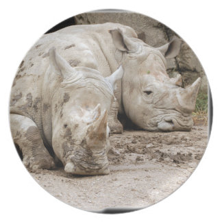 rhino12_10x10 melamine plate