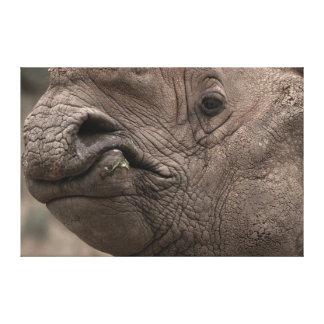 Rhino 8856 canvas print