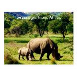 rhino africa greetings post card