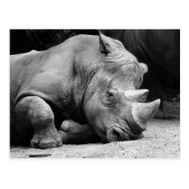 Rhino Black and White Postcard