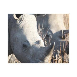 Rhino Canvas