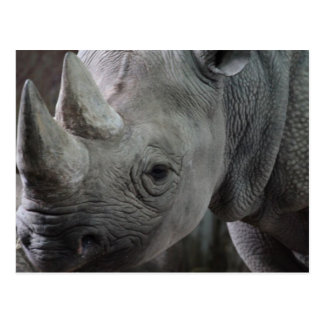 Rhino Facts Postcard