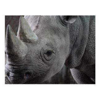Rhino Facts Postcard