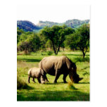 rhino family post card