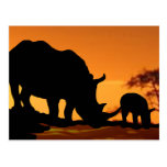 rhino family postcard