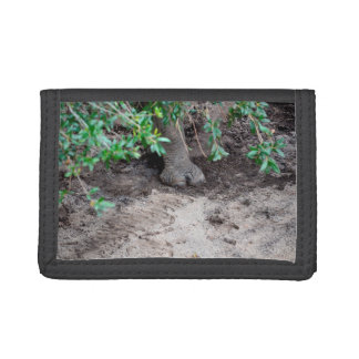 rhino foot on sand under tree trifold wallet