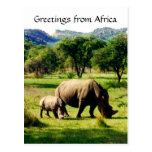 rhino greetings post cards