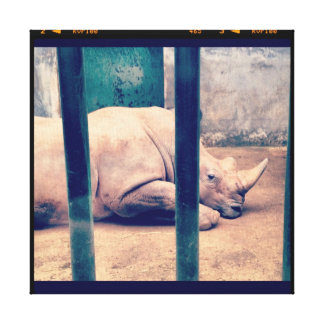 Rhino in a zoo gallery wrapped canvas