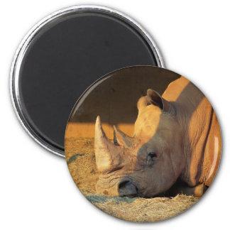 Rhino in Sunset Magnet