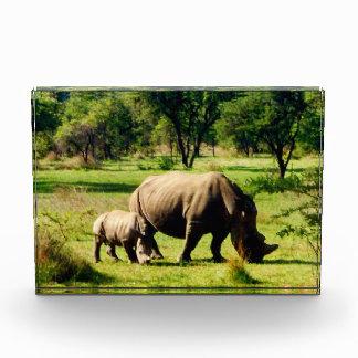 rhino love acrylic award