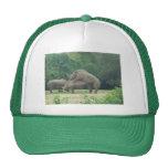 Rhino Love Trucker Hat