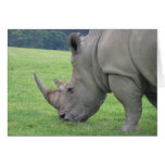 Rhino Note Card