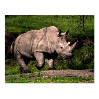 Rhino on Hill Postcard