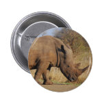 Rhino Pinback Buttons