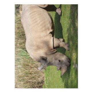 Rhino Postcard