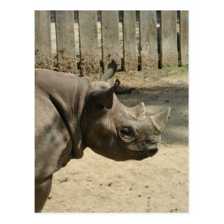 Rhino Postcard! Postcard