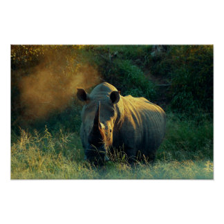 Rhino prints, images, pictures, photos posters