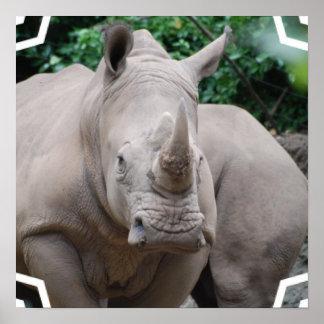 Rhino Romp Poster