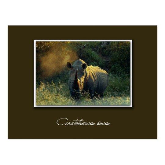 Rhino safari postcards