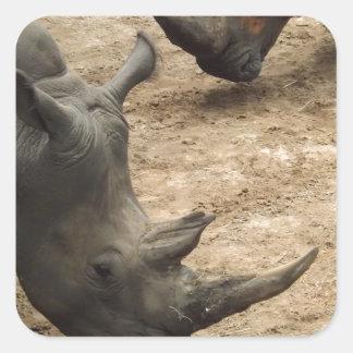 Rhino Square Sticker