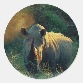 Rhino stare round sticker