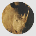 Rhino Sticker