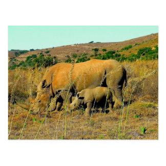 rhinoceros and reeds postcard