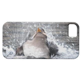 Rhinoceros Auklet - Tufted Puffin Relative iPhone SE/5/5s Case