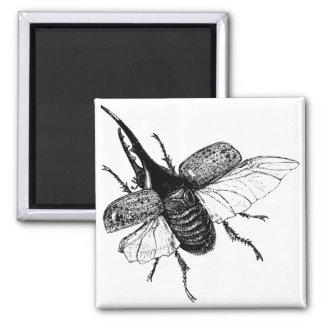 Rhinoceros Beetle Vintage Wood Engraving 2 Inch Square Magnet