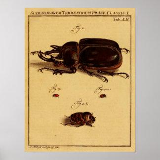 Rhinoceros Beetles Poster