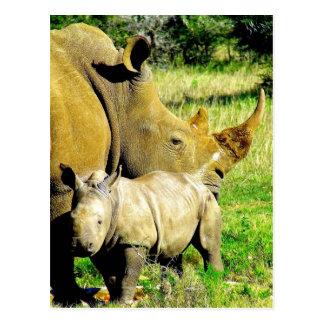 rhinoceros calf and mother postcard