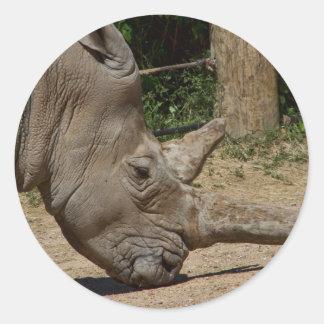 Rhinoceros - Ceratotherium simum simum Classic Round Sticker