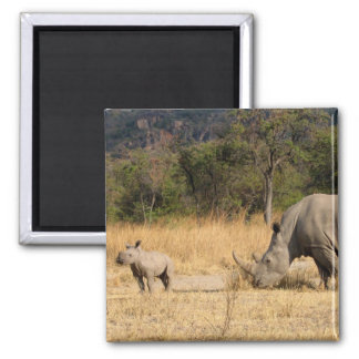 Rhinoceros Family Square Magnte 2 Inch Square Magnet