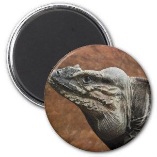 Rhinoceros Iguana Magnets