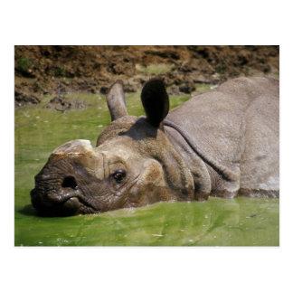 Rhinoceros in water postcard