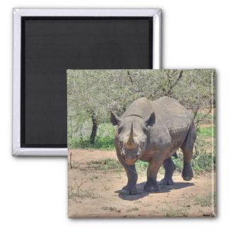 rhinoceros fridge magnet