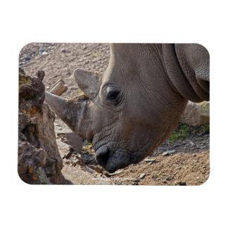 Rhinoceros Magnet