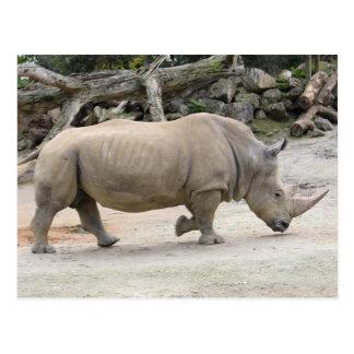 Rhinoceros on the run @ Auckland Zoo Postcard