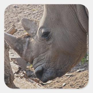 Rhinoceros Square Sticker