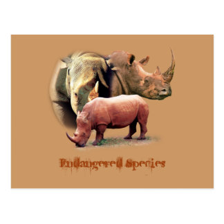 Rhinoceros The Endangered Species Cards
