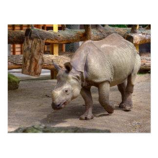 Rhinoceros unicornis postcard