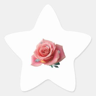 Rhinocerose Star Sticker