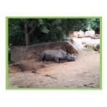 Rhinocers que duerme debajo de sombra postal