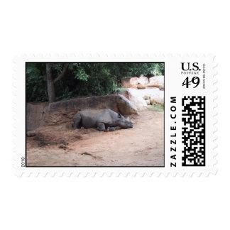 Rhinocers Sleeping Under Shade Postage Stamp